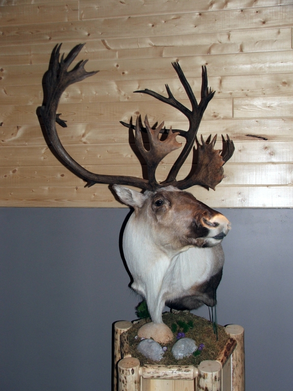 Taxidermy Gallery Westerose Wilderness Taxidermy Studio